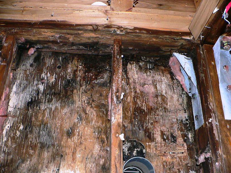 腐朽している耐力壁の構造用合板・枠組材